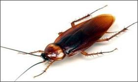 Fornendovi una breve descrizione degli insetti infestanti appartenenti